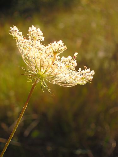 bright flower by Danalynn C