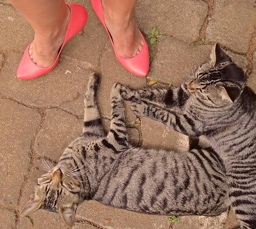 Scarpin e gatos