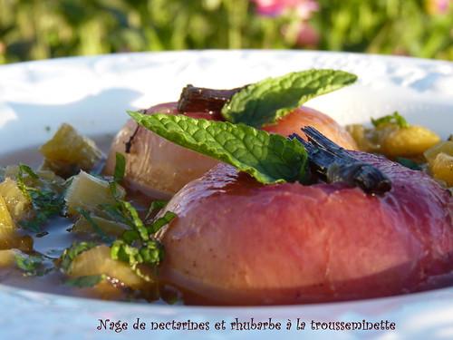 nage de rhubarbe, nectarines à la trousseminette