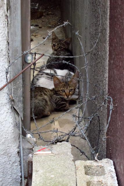 Today's Cat@2011-08-04