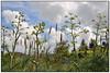 Ferula communis (Mike G. K.) Tags: plant spring village cyprus ferulacommunis mikegk:gettyimages=submitted αναθρήκα κάτωδρυσ katodrus άρτηκασ