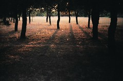 (yavuz.kaya) Tags: trees sunset shadow color art film colors beautiful 35mm canon wow turkey wonderful nice dof bokeh outdoor good istanbul stunning excellent 28 fullframe oldcamera 135mm 50mm18 canonfl canonfx aga 135mm28 135film agalar eurooptik