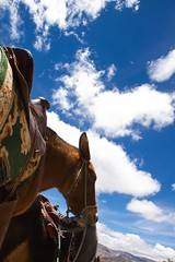 Caballo I [Quilotoa, Cotopaxi, Ecuador] (.marcelopaz) Tags: naturaleza nature caballo ecuador paisaje cotopaxi facebook quilotoa volcan peoplequilotoa