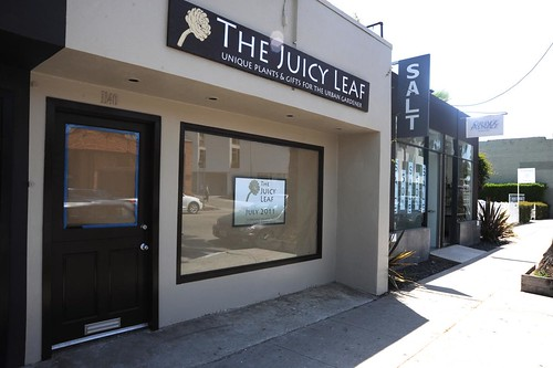 The Juicy Leaf Abbot Kinney