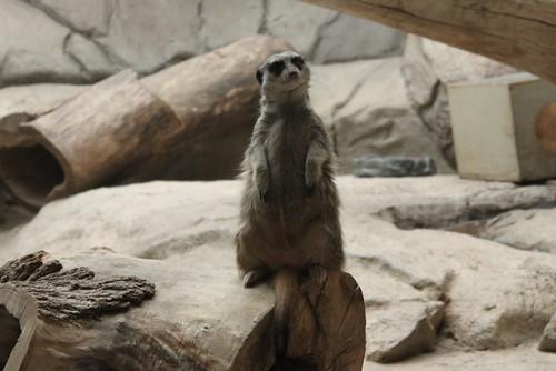 zoo 056