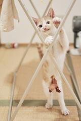 [フリー画像] 動物, 哺乳類, 猫・ネコ, 子猫・小猫, 201107141100