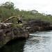 Saltos ornamentais no Rio Elliot
