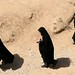 Iranianas cobertas pelo chador