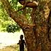Escalando as mangueiras