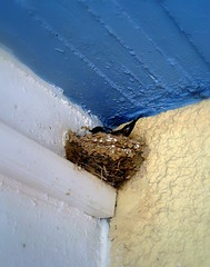 The nest 2011-07-12 11.03.21