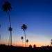 Pôr do sol ao fundo dos coqueiros