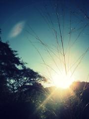 Eventide (Exclaim.Photography) Tags: favorite tree wheat flare capturecreationguatemalabluesky