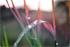 Time to pretend (elzixd) Tags: blue light red summer orange macro green nature water colors beauty drops interesting rainbow nikon purple crystal bokeh violet latvia gradient land mm 18 55 waterdrops d3000