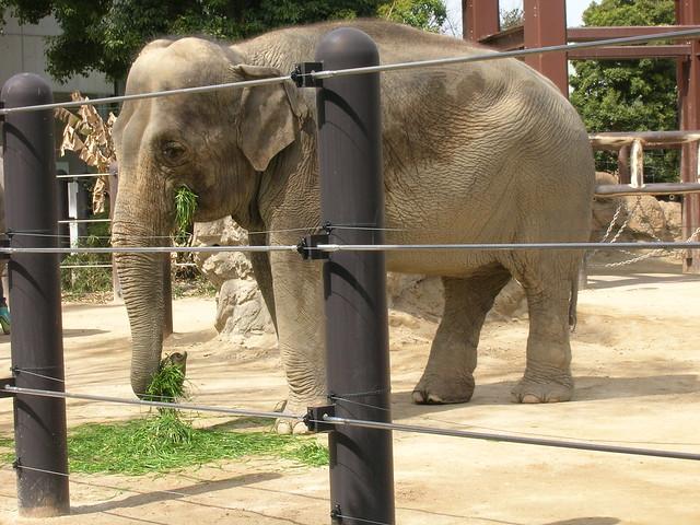 d7-06-ueno-park-zoo