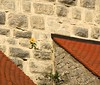 For climbers only! (:Linda:) Tags: roof tower castle nature stone wall germany bavaria funny village natur hideandseek yellowflower sunflower stonewall hiding dach dachziegel hideaway sonnenblume rooftile hirschberg gewinner dachschindel beavertailshaped fishscalepattern natureisthewinner natureiswinning fischschuppenmuster