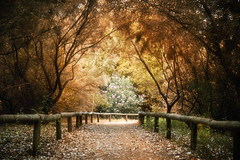 Camino. Explored (Z Snchez) Tags: trees tree canon way hojas arbol photography photo sevilla arboles photographer camino path sheets mystical sendero senda caminho     zusanchez beautifulautumntrees