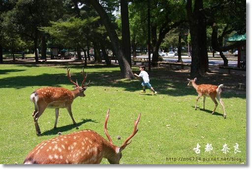 20110711_4thDay Nara_2440 f