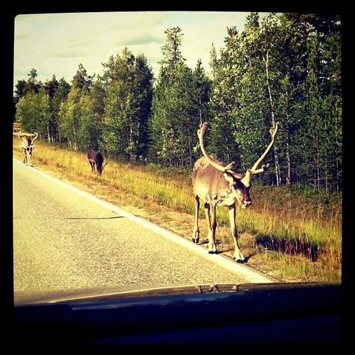 Rovaniemi - Capo Nord - 25.07.11