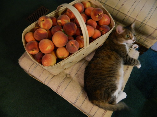 Peaches! (and Twinkle)