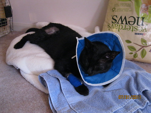 07/31/2011: The cone of shame.