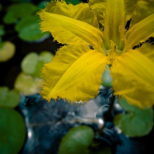 Yellow in a Bowl, Mukojima Hyakkaen Garden