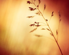 A Splash of Color (CarolynsHope) Tags: autumn red orange color fall grass gold golden rust colorful bright vivid minimal carolynshope