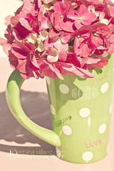 Heaven on Earth (Chrisseee) Tags: pink white green canon quote limegreen text mug font hydrangea dots sia hortensia everythingpink kristiinahillerstrm chrisseee