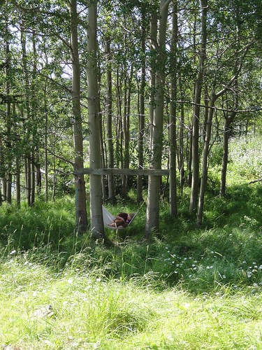 Sunny summer afternoon in the aspen glade.