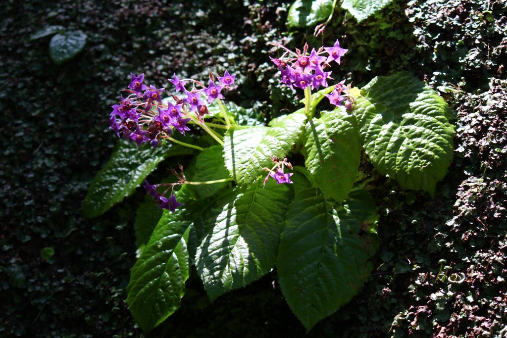Kita Kamakura Hydrangea spot (26)
