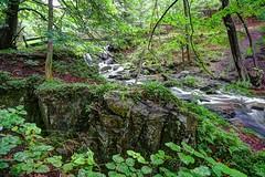Forsakar (MikeAncient) Tags: nature forest landscape geotagged skne sweden naturereserve ravine sverige maisema luontokuva mets ravin luonto naturephotography maisemakuva ruotsi forsakar rotkolaakso luonnonvalokuvaus