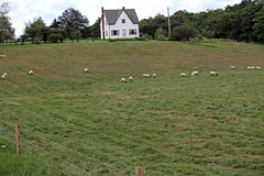 Sheep farm in PEI