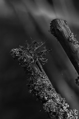 (carulmare) Tags: wood old fence moss imagination mossa staket grdesgrd