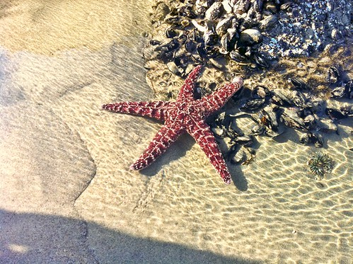 Starfish Venice Beach