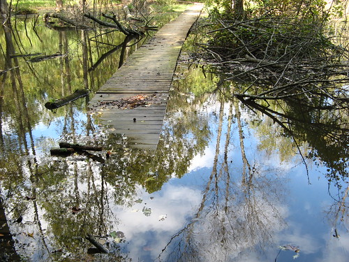 Sunken boardwalk on the Osprey Trail
