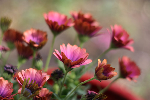 174-daisies