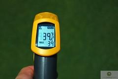 canopy temperature bentgrass summer