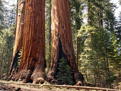 Sequoia National Park (janiszeh) Tags: california usa nationalparks sequoianationalpark