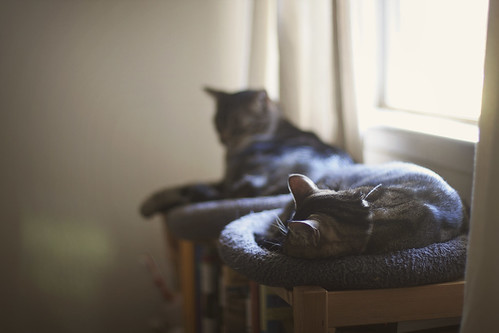 Nap Masters