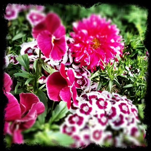 Funky #pink and #white #flower #photo !!