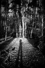 Into the trees (RoryO'Bryen) Tags: trees woods roryobryen leica m6 iso400 dusk film analog 35mm rangefinder leicam trix messsucher copyrightroryobryen