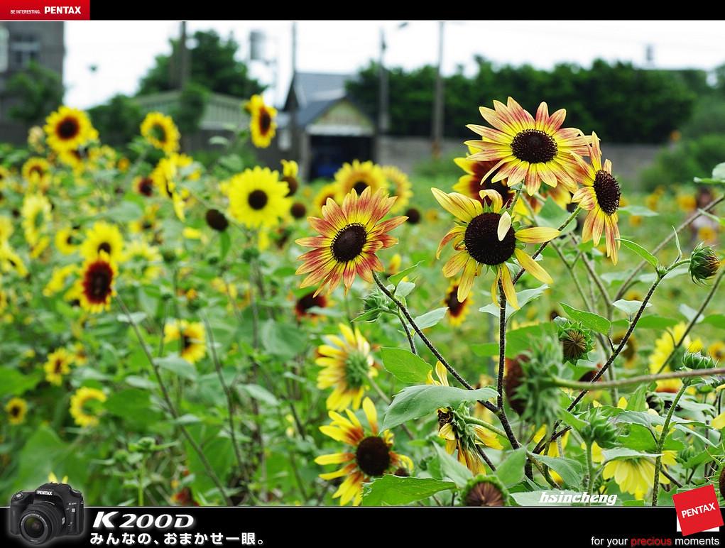 向陽農場隨拍