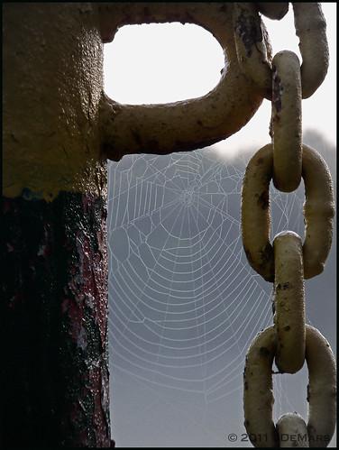 Bonnet's Web