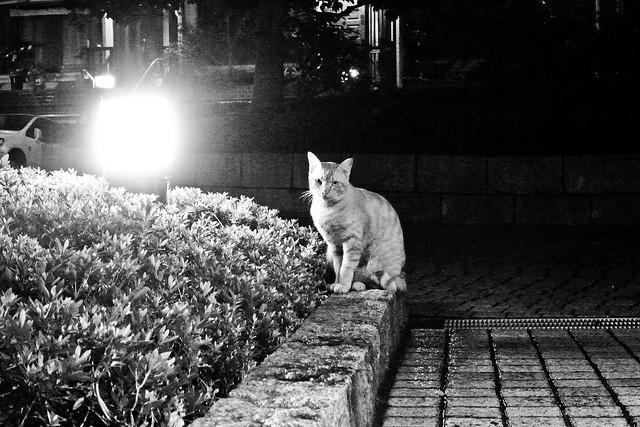 Today's Cat@2011-07-19