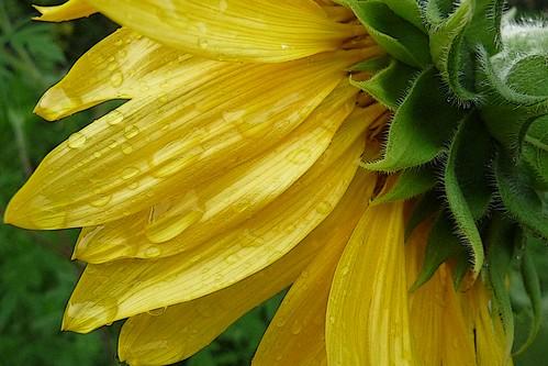 floral 11 by joannemariol