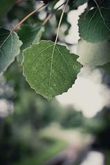 Well structured (MoreThanOneView) Tags: tree green deutschland leaf bokeh path struktur structure grn blatt baum weg niedersachsen hbw ramelsloh