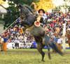 El morito (Eduardo Amorim) Tags: horses horse southamerica caballo uruguay cheval caballos cavalos prado montevideo pferde cavalli cavallo cavalo gauchos pferd hest hevonen chevaux gaucho 馬 américadosul montevidéu häst uruguai gaúcho 말 amériquedusud лошадь gaúchos 马 sudamérica suramérica américadelsur סוס südamerika jineteada حصان άλογο americadelsud gineteada ม้า americameridionale semanacriolla semanacriolladelprado eduardoamorim semanacriolladelprado2011 ঘোড়া