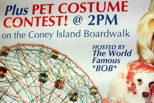 Pet costume contest!
