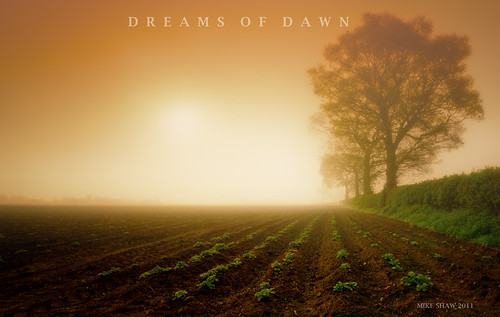 Dreams-Of-Dawn