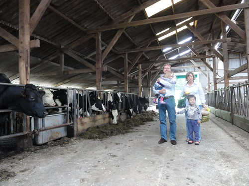In the stable of a farm in Ommen