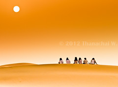 Tourists on the Dune II Comtemplating the Sunrise (Beum Gallery) Tags: africa afrique camel camels chameau chameaux desert dromadaire dromadaires dune dunes dsert ergchebbi femmes filles girls journey ladies leverdusoleil maghreb maroc merzouga morocco nomade range range riding sable sahara saharaoui sand soleil soleillevant sun sunrise touristes tourists travelling voyage women